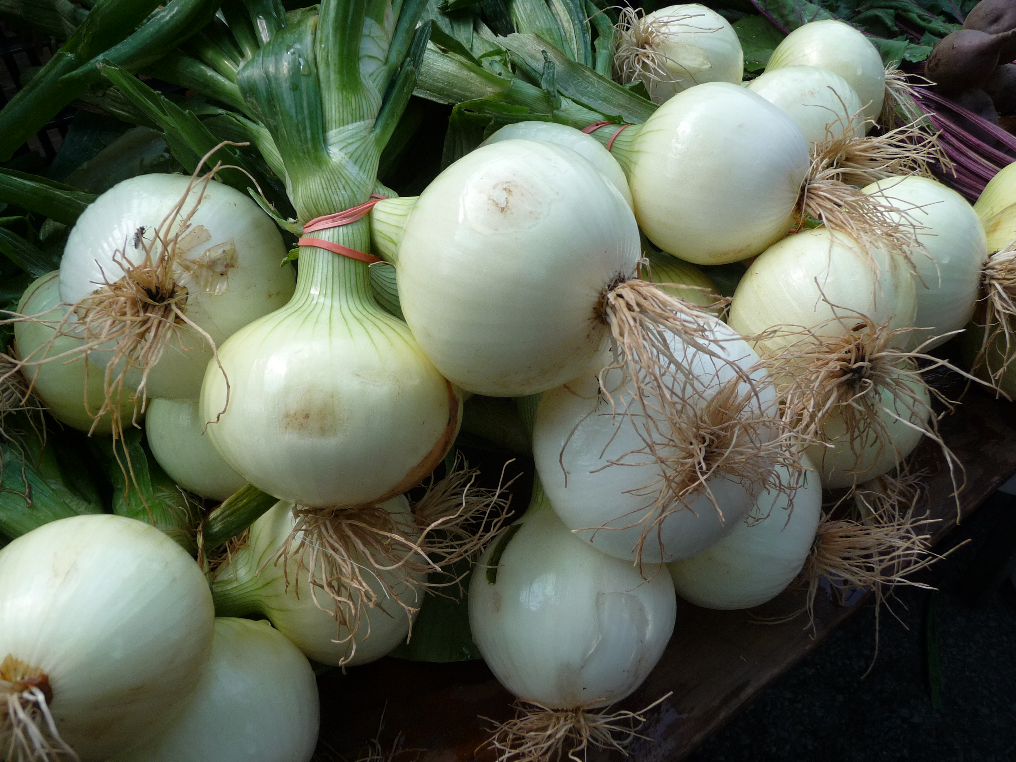 Five flavors kitchen sotto voce how the onion can improve your my uncle ilo short for italo always said that one should eat onions and garlic to improve ones voice i of course did not believe him one bit ccuart Gallery