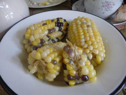 Field Corn, Huallanca, Peru 5/2010
